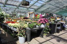 Keuze in overvloed bij tuincentrum Van Eeckhaut