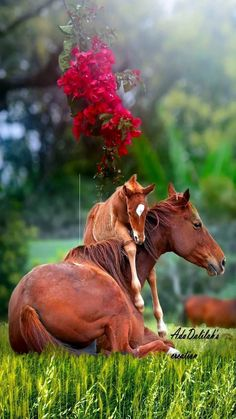 and pets zenglen, and pets 39 clues cards, wild and pets comparison and contrast outline format, small animals sold at petsmart. Baby Horses, Cute Horses, Pretty Horses, Horse Love, Cute Animal Pictures, Horse Pictures, Nature Animals, Animals And Pets, Small Animals