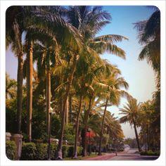 Vamos para Miami > Passeios - Dicas de passeios em Miami. Tours, Sightseeing e mil coisas para fazer em Miami.