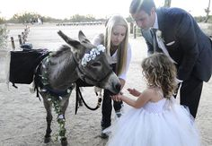 Seven Reasons for Having a Donkey at Your Wedding.