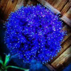 Blooming #purple Pretty Flowers, Bloom, Purple, Beautiful Flowers, Viola