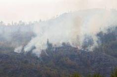 Los brigadistas comenzaron a controlar algunos focos de los incendios forestales, especialmente en el Parque de Los Alerces. Tapestry, Nature, Spot Lights, National Parks, Hanging Tapestry, Tapestries, Naturaleza, Nature Illustration, Outdoors