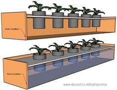 The Advantages Of Growing Food Indoors With Hydroponic Gardening