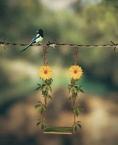 You know that you to become a better pictures or get into serious photography. Beautiful Nature Wallpaper, Love Wallpaper, Beautiful Birds, Wallpaper Backgrounds, Beautiful Images, Iphone Wallpaper, Miniature Photography, Cute Photography, Indoor Photography