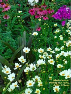 Coreopsis 'Star Cluster' is a creamy white. A deep purple eye slowly forms in the bloom in the fall. Long-blooming. #gardens