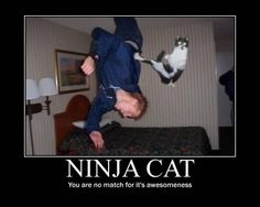 how the fuck did that happen | Ninja cat. (How the hell did this happen? Seriously, how?)