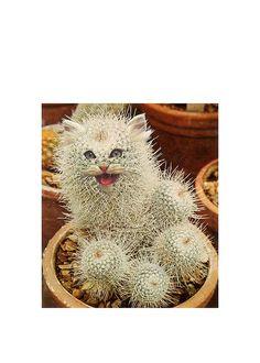 Cat Cactus Hand cut collage - hahaha! <3