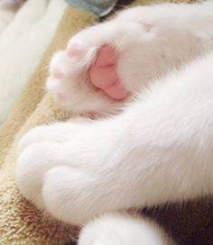 Lovely-KittyCats, sasaq: Paw by Sawa Masaki on Flickr.