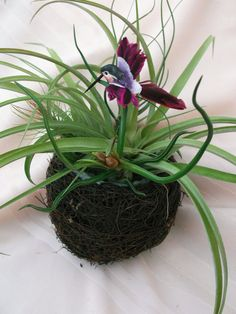 Large grapevine bird's nest air plant by ThePerfectPlant on Etsy