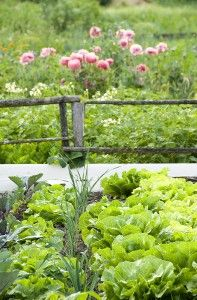 Interplanting Vegetables: Root Depth, Plant Height. To assist your garden planning, here are two charts that might help: one for plant height at maturity, one for rooting depth.