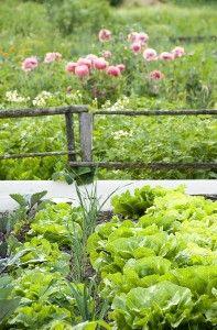 Interplanting vegetables