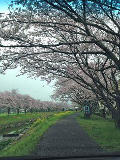 草場川 Chikuzen-machi,Asakura.
