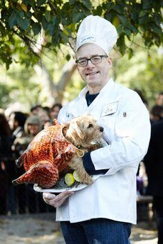 100 Genius Pet Costumes for Halloween via Brit + Co