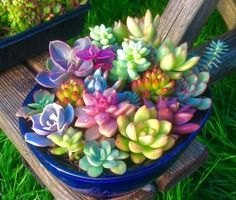 For The Love Of Life & Living Colorful Succulents, Succulents In Containers, Cacti And Succulents, Planting Succulents, Cactus Plants, Garden Plants, House Plants, Planting Flowers, Yellow Plants