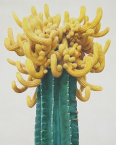 Crazy beautiful yellow cactus flower hyper realistic painting by Kwang-ho Lee