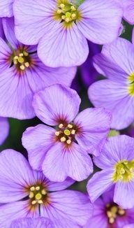Purple flowers pinned with Bazaart