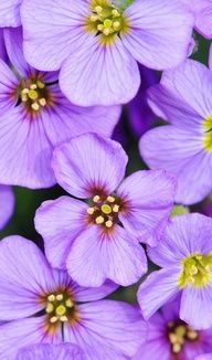Purple flowers pinned with Bazaart