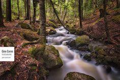 Le ruisseau du Parc Lepage