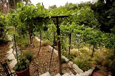 the home vineyard on pinterest vineyard wineries and napa valley