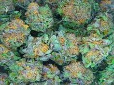 All Medical Marijuana In S.F. Might Be Doomed