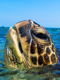 Turtle.. (Clark Little photography)