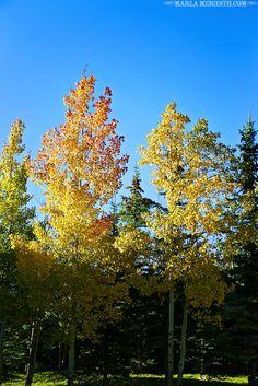Fall in Telluride, Colorado | FamilyFreshCooking.com