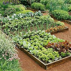 Learn exactly how to plan your first vegetable garden with this step by step guide! Discover what tools you need, how to plan your vegetable garden layout, determining the perfect spot for your garden and which vegetables grow best depending on the season Raised Garden, Organic Gardening, Garden Design, Plants, Garden Layout Vegetable, Best Garden Tools, Urban Garden, Garden Styles