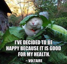 """""""Ho deciso di essere felice perché fa bene alla mia salute"""" - Voltaire"""