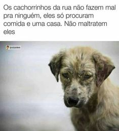 Ô mds. Animals Of The World, Animals And Pets, Funny Animals, Cute Animals, Pet Dogs, Dog Cat, Death Note Funny, Horses And Dogs, Beautiful Dogs
