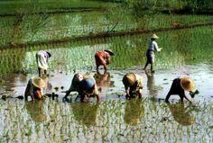 La dieta global es una amenaza para la seguridad alimentaria. http://www.farmaciafrancesa.com