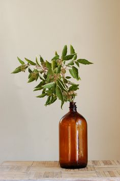 Amber. Jar. Foliage. Arrangement.
