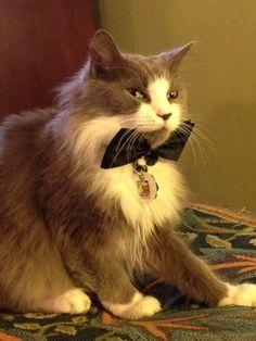 Dapper cat named Mouse.