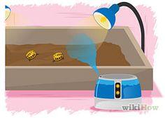 Make A Habitat for Hermann's Tortoises - wikiHow