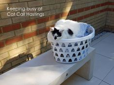 We Are Doing Our Best To Keep Our Work Going - Cat Call UK Found Cat, Cat Work, Make A Donation, Lost & Found, Plastic Laundry Basket, Charity, Cats, Fun, Gatos
