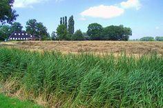 Eekwerd - Boerderij 'De Groene Wierde' Vergroot deze foto    Deze boerderij staat aan de rand van de -vrijwel helemaal afgegraven- wierde Eekwerd.  Ten westen van De Groene Wierde stond vroeger het huis van de bekende kroniekschrijver Abel Eppens (de naam van deze plaats was 'Bolhuis'); hier staan nu alleen nog een tuinmanshuis en een koetshuis. Ancestry, History, Country, Historia, Rural Area, Country Music