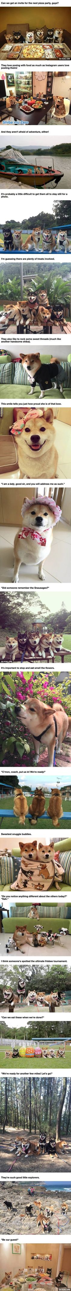 This Doge Family Is The Sweetest Group Of Pups You'll Ever See
