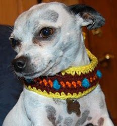 Retro Dog Collar   AllFreeCrochet.com