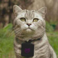 Catstacam App Reveals Cats Are Terrible Photographers  http://a.msn.com/r/2/AA9IU7Z