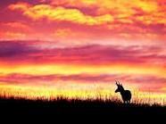 Sunsets and Sunrises Sunset