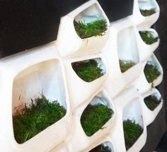 This Modular Green Wall System Generates Electricity From Moss IaaC Student Elena Mitrofanova, working alongside biochemist Paolo Bombelli has created a proposal for a facade system that utilizes the natural.