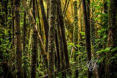 Hilo Hawaii #visionsbycarolphotography Plants, Photography, Photograph, Fotografie, Photoshoot, Plant, Planets, Fotografia