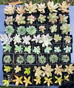 Shop for on Etsy, the place to express your creativity through the buying and selling of handmade and vintage goods. Succulent Wedding Favors, Wedding Favours, Buy Succulents Online, Rosettes, Arizona, Etsy Shop, Shapes, Unique Jewelry, Handmade Gifts