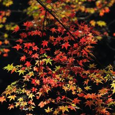 佛通寺にて #canon #PowerShot #G3X #autumnleaves #紅葉