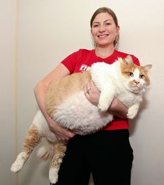 There's nothing like photos of adorable fat cats to inspire laughter and maybe inspire your human to go on their diet. Check out these super cute fat cats. Fat Animals, Funny Animals, Crazy Cat Lady, Crazy Cats, Beautiful Cats, Animals Beautiful, Animals Amazing, Adorable Animals, Kittens Cutest