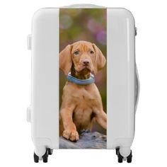 #photo - #Cute puppyeyed Hungarian Vizsla Dog Puppy Photo -_ Luggage