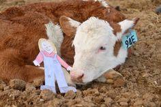 Beef Farmer Math