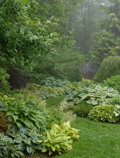 Green backyard with lovely hostas. A great border perennial. Thrives in summer.