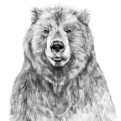 This reminded me of your bear @Sarah Demeester  Bear by Jamie Mitchell
