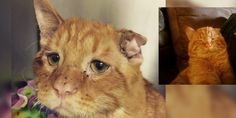 A shelter cat with the saddest face had given up hope, sitting quietly in the cage until a couple came to rescue him. What a difference adoption can make in just an hour!Meet BenBen the cat!         Courtesy: @benbencatcat         A sad little ginger stray came to the shelter with a crushed spine, s...