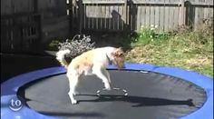 Animals on trampolines.  Too funny!!!  Pinned from www.godtube.com, 8/24/2013